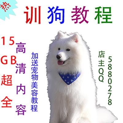 2015最新训狗视频教程 训犬教程训狗教程视频 零基础入门教程0