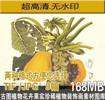 古图植物 花卉果实 珍稀植物装饰画 素材图库1